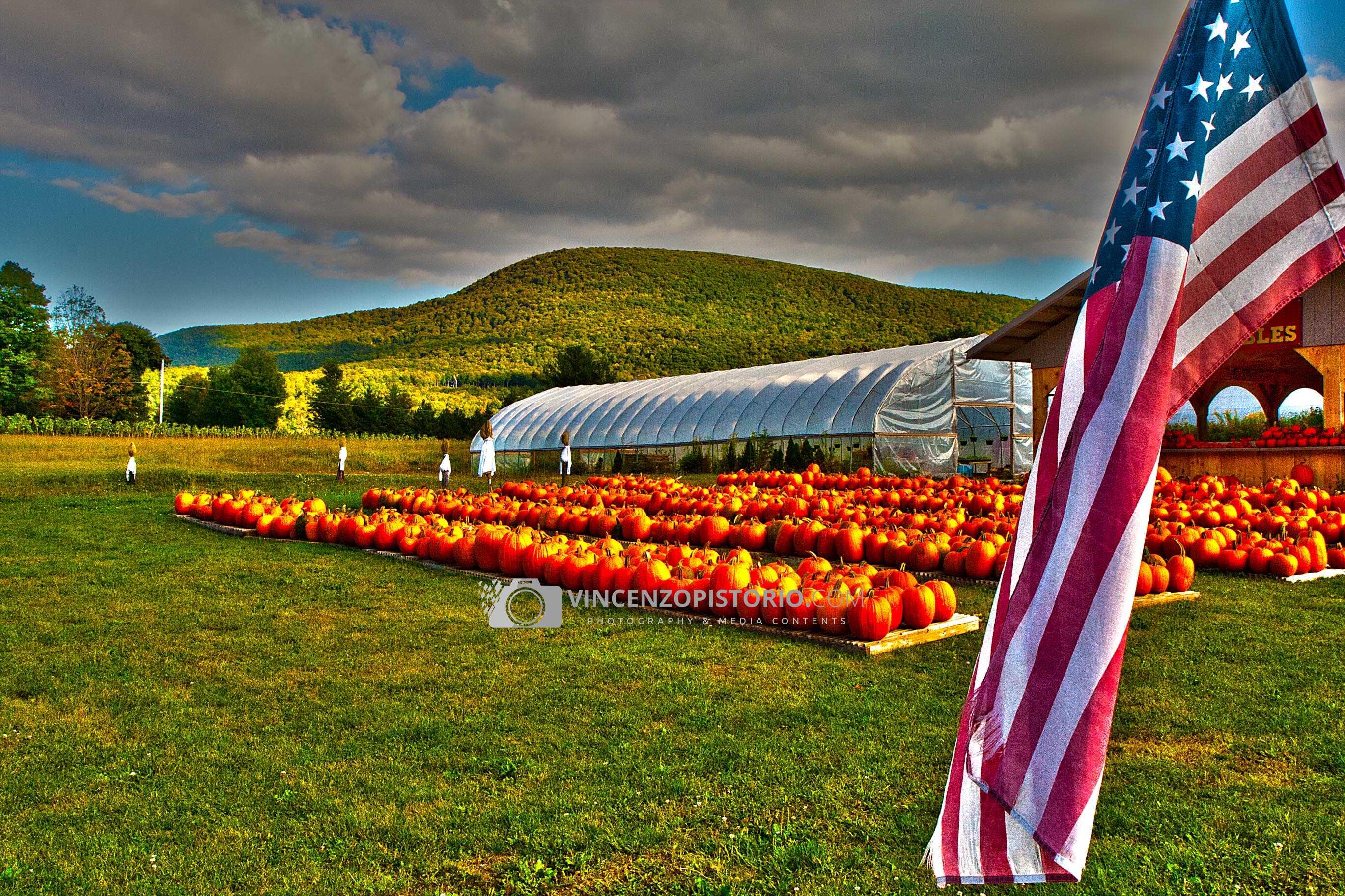 A pumpkin field – HDR