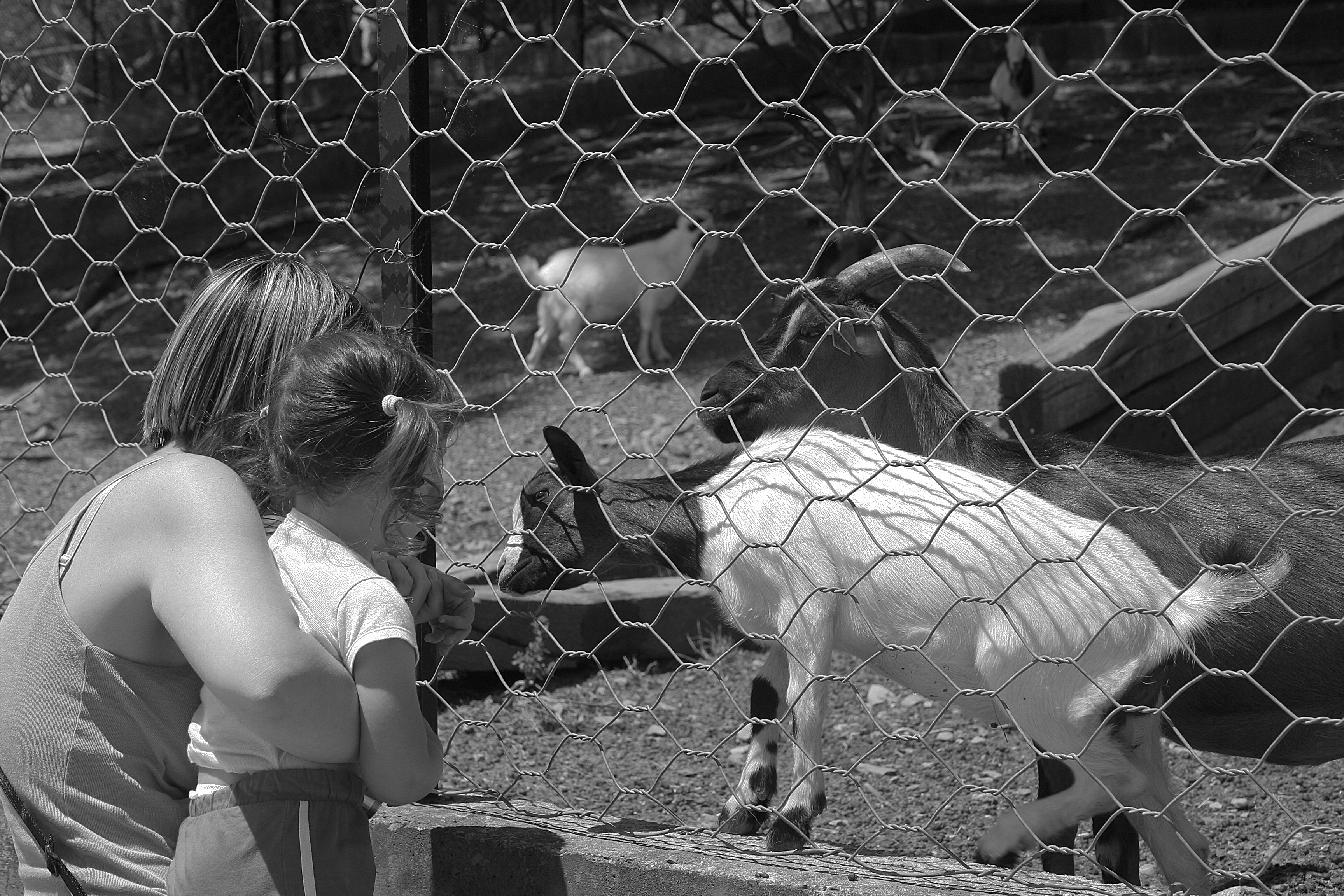Silvia and Elisa with a goat – BW