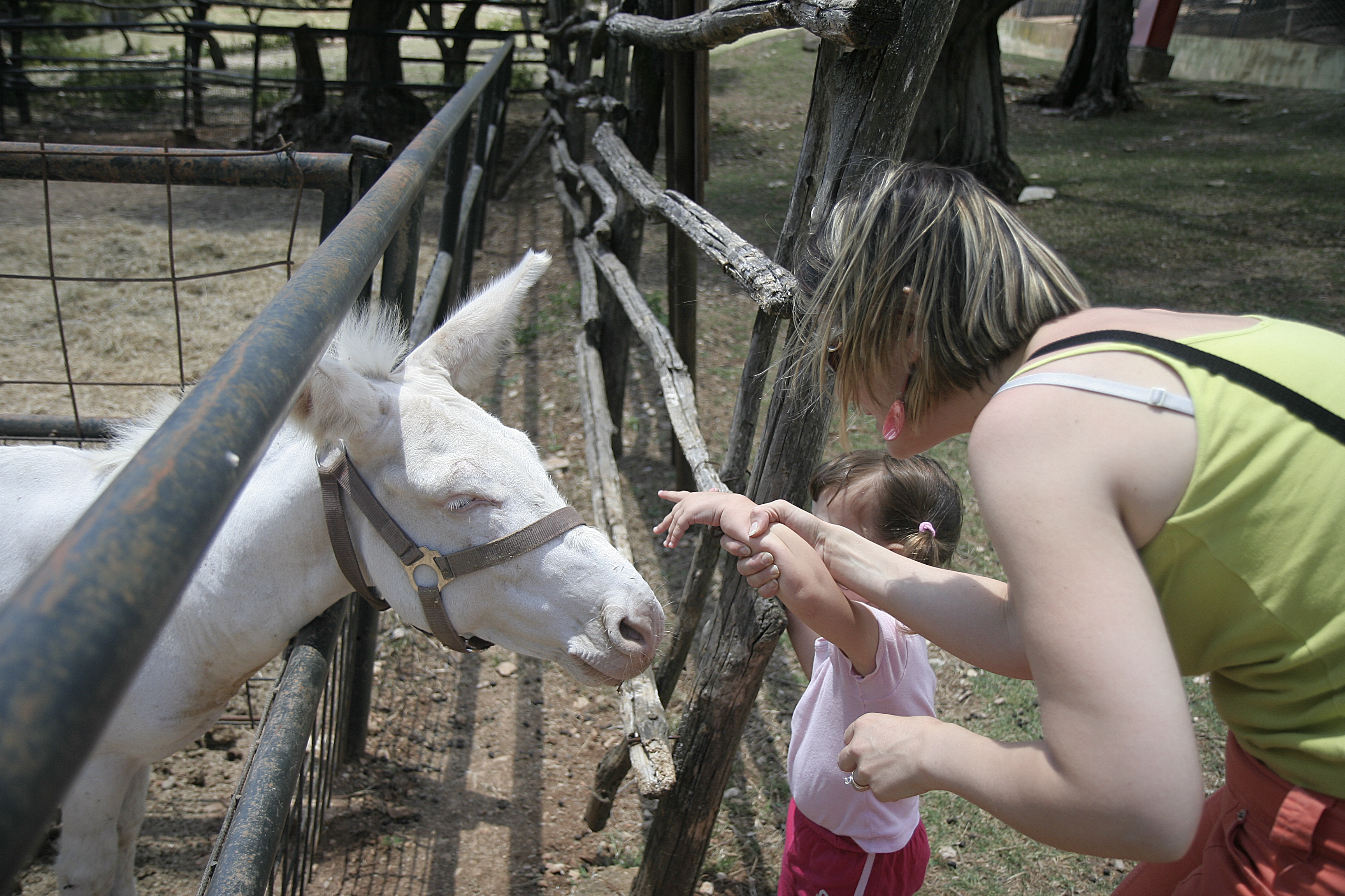 Elisa and Silvia with a white donkey