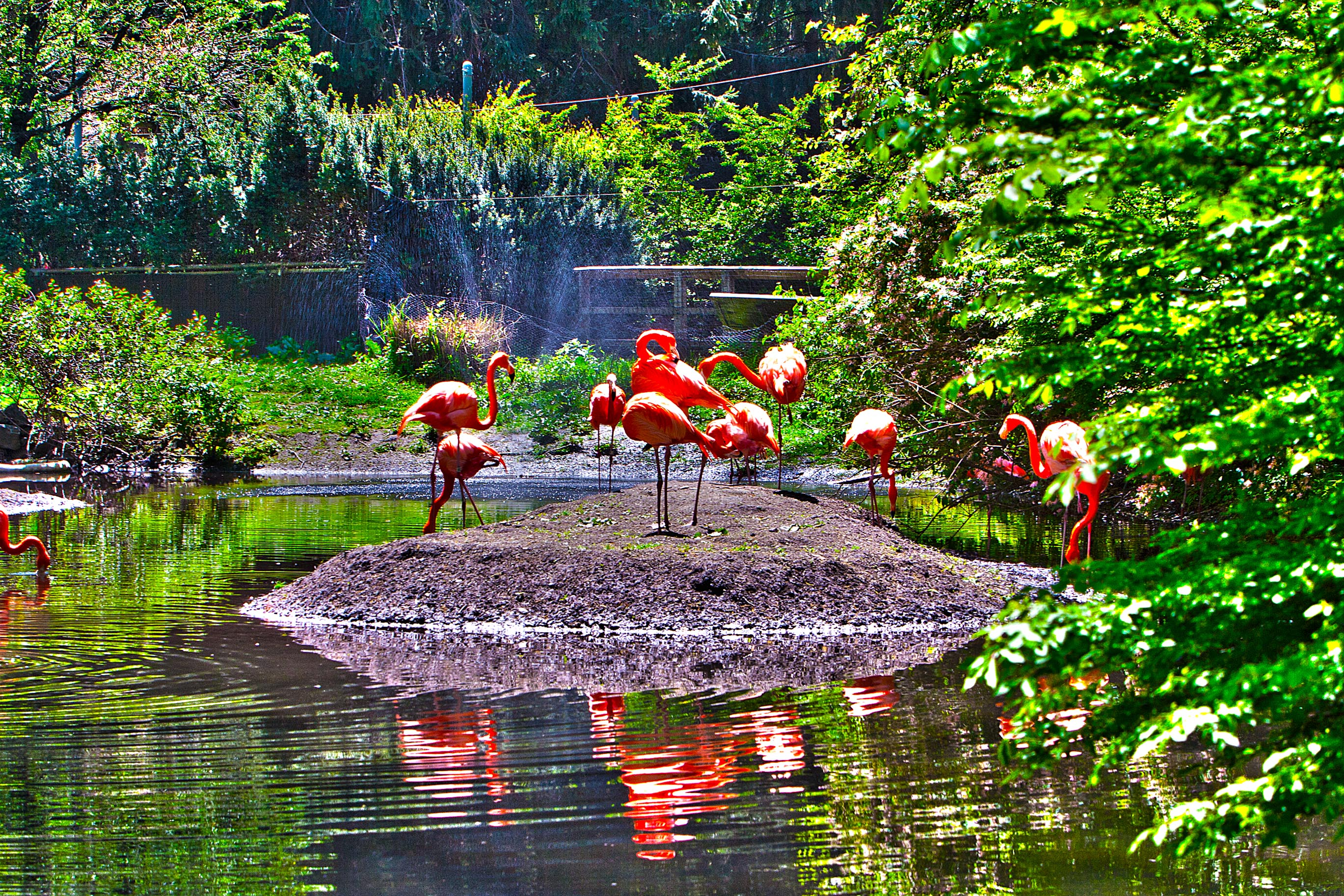 Flamingos at Bronx Zoo – HDR