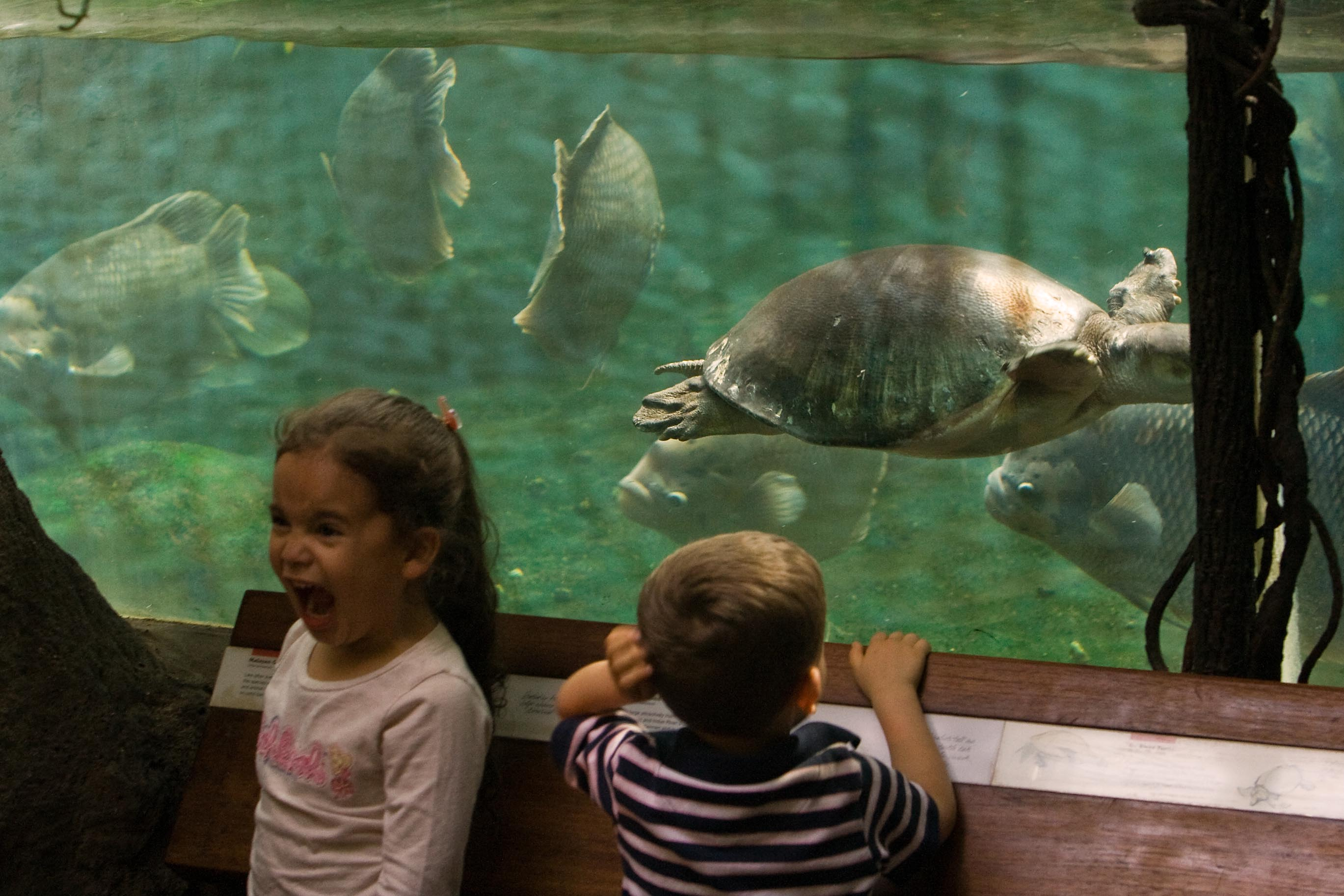 Kids and a big turtle – 2