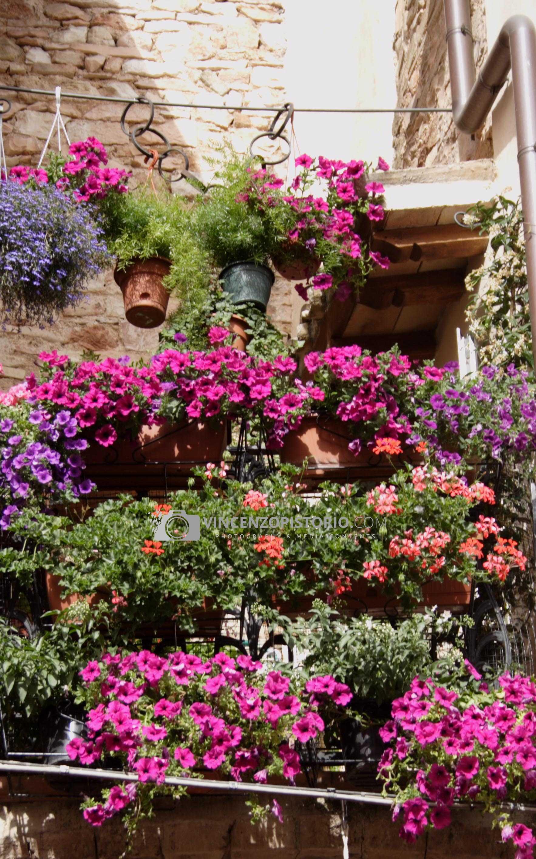 Triumph of flowers on balcony